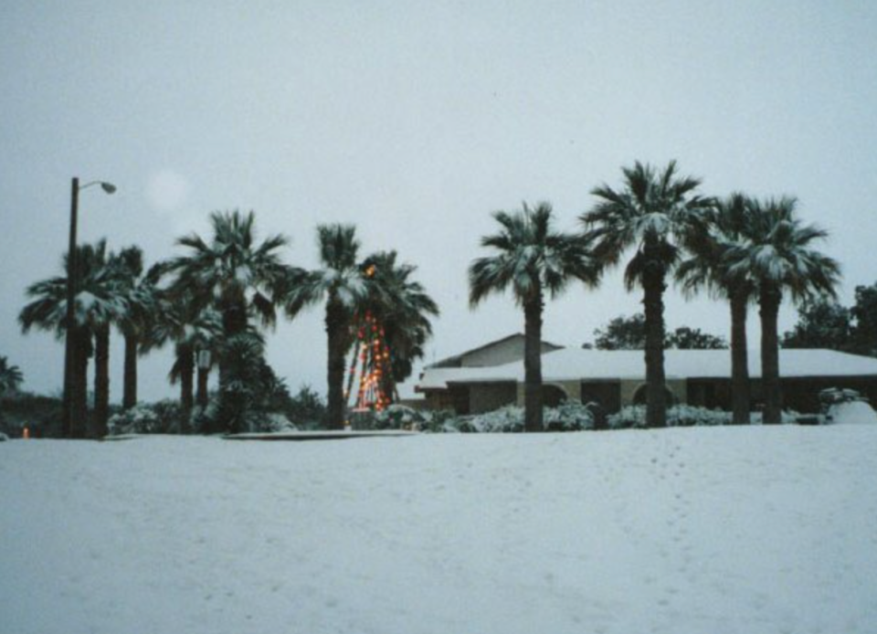 An unusual sight: palm trees covered in snow in Portland, Texas