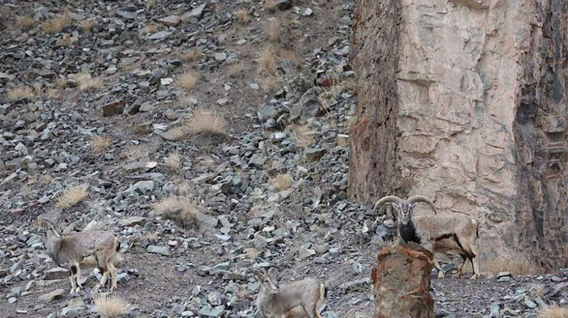 Can you spot the leopard about to pounce? Source: Caters