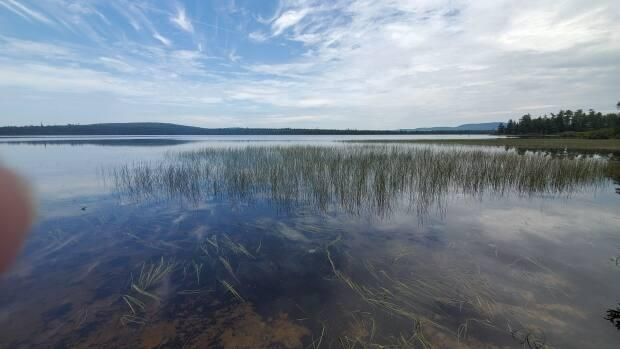 Grandmothers and mothers with the Wolastoqey First Nations have been camping at Miramichi Lake since Monday. The pesticide rotenone can't be applied when anyone is swimming or boating on the water.  (Shane Fowler  - image credit)