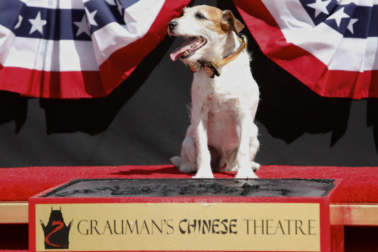 """Canine star Uggie attends the pawprint ceremony for Uggie the dog at Grauman's Chinese Theatre on Monday June 25, 2012 in Los Angeles. Uggie, star of the Oscar-winning film """"The Artist,"""" became the first dog to cement his paws outside of Grauman's Chinese Theatre. Uggie was celebrated during a ceremony Monday with a cake in the shape of a fire hydrant and golden bow-tie collar. He arrived in a fire truck. The event also marked Uggie's retirement from show business. (Photo by Joe Kohen/Invision/AP)"""