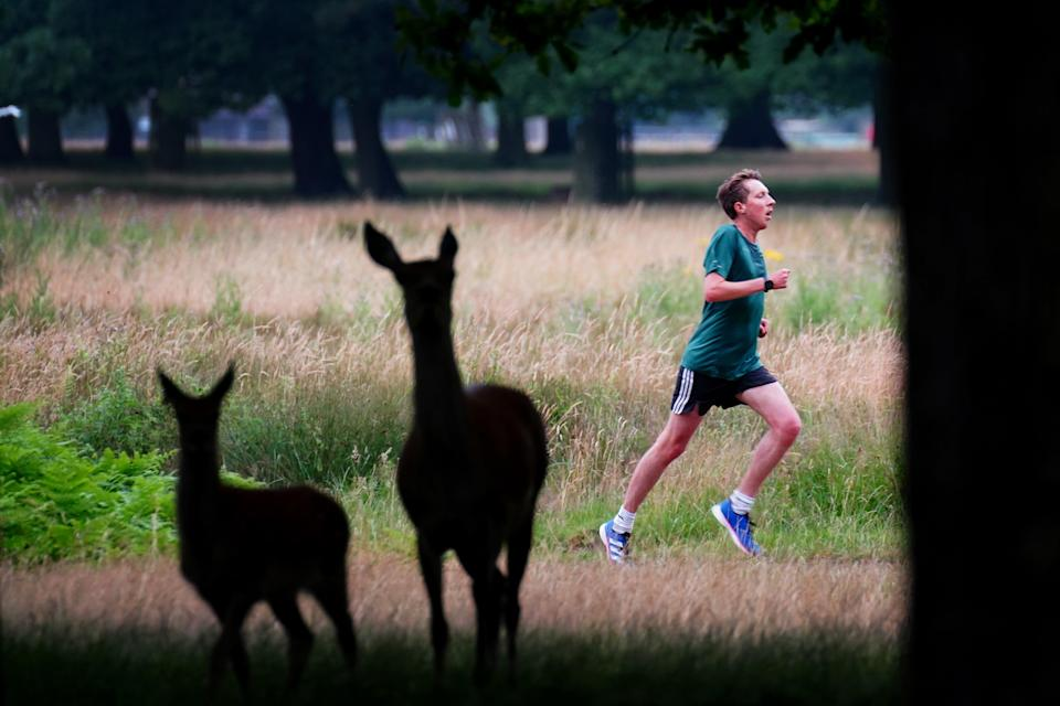 A runner passes two deer as he takes part in the Parkrun at Bushy Park in London (Victoria Jones/PA) (PA Wire)