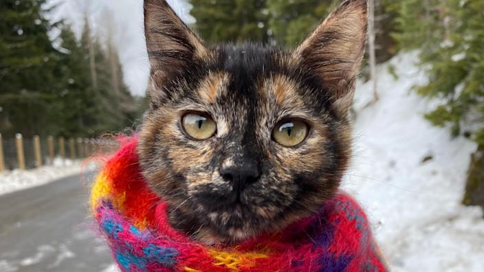 Duckie the tortie, who is still in the early stages of leash-training, gets bundled up in a scarf or blanket and toted along on family hikes.