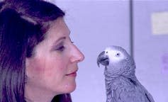 """<span class=""""caption"""">Alex, an African gray parrot, was trained by ethologist Irene Pepperberg to count objects.</span> <span class=""""attribution""""><a class=""""link rapid-noclick-resp"""" href=""""http://www.apimages.com/metadata/Index/BOOKS-PARROT-MEMOIR/2c3dc3d5e2d34d3296629977063df930/1/0"""" rel=""""nofollow noopener"""" target=""""_blank"""" data-ylk=""""slk:AP Photo/File"""">AP Photo/File</a></span>"""