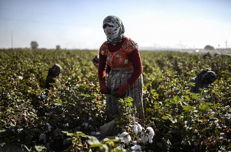 A Syrian Kurdish woman works in a field near the Syrian border in the Atmanek village on October 25, 2014