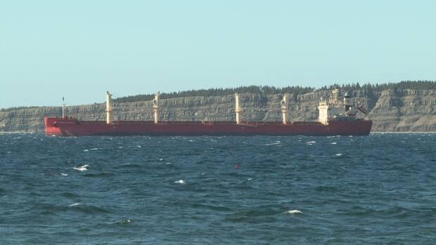 12 crew members on the Federal Montreal cargo ship, seen here anchored in Conception Bay, are confirmed to have COVID-19. Public Health says the cases bring no concern of community spread in the region. (Heather Gillis/CBC - image credit)