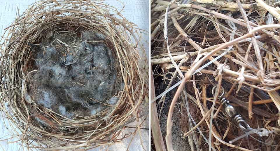 A WIRES volunteer was disgusted by a nest which contained nylon string, fishing line, fishing swivels, plastic fleece lining, human hair and plastic pieces. Source: Supplied