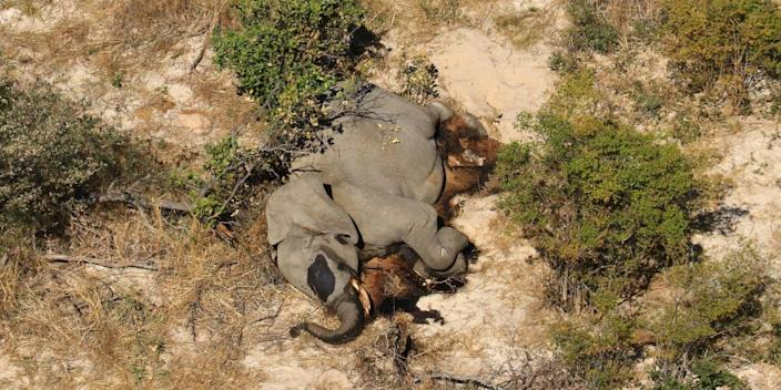 An aerial view of an elephant that has died of mysterious causes in the Okavango Delta in Botswana