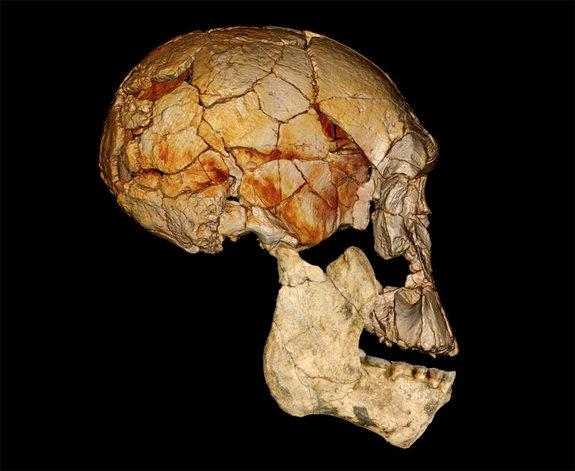 "Four decades ago, in 1972, the Koobi Fora Research Project (KFRP) discovered the enigmatic fossilized skull known as KNM-ER 1470, or ""1470"" for short, which ignited a now long-standing debate about how many different species of early <em>Homo</"
