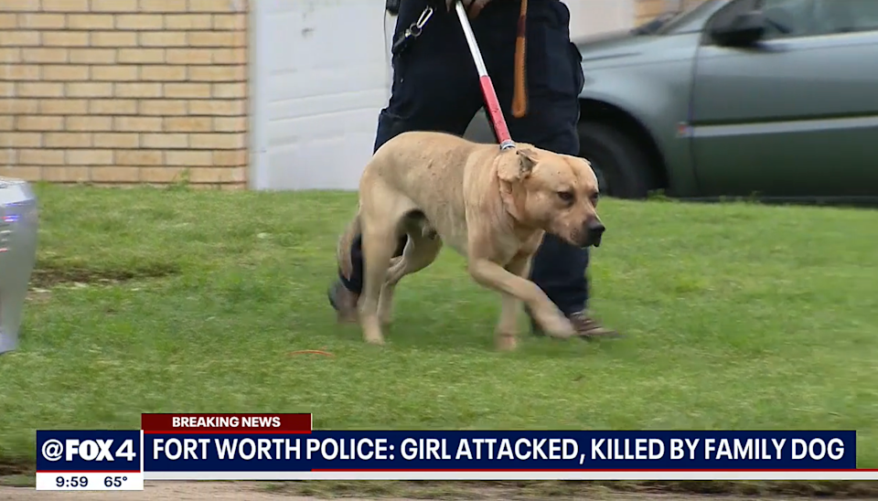 One of two dogs removed from the girl's home (@Fox4 News)