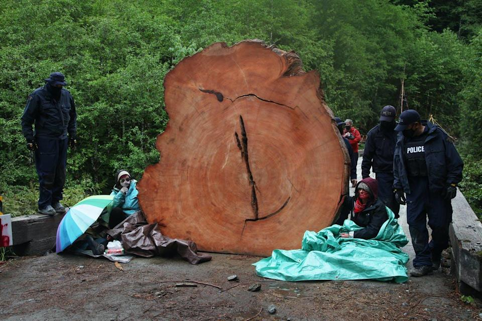Officers walk around a large tree stump and two seated protesters.