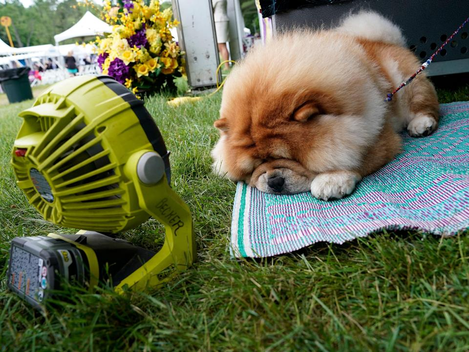 dog cooling himself off with a fan