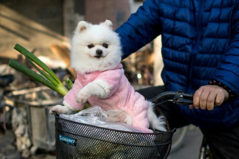At least 40 percent of pet merchants in China sell pet clothing, according to Yourpet Market Research Institute, which studies the country's huge pet industry