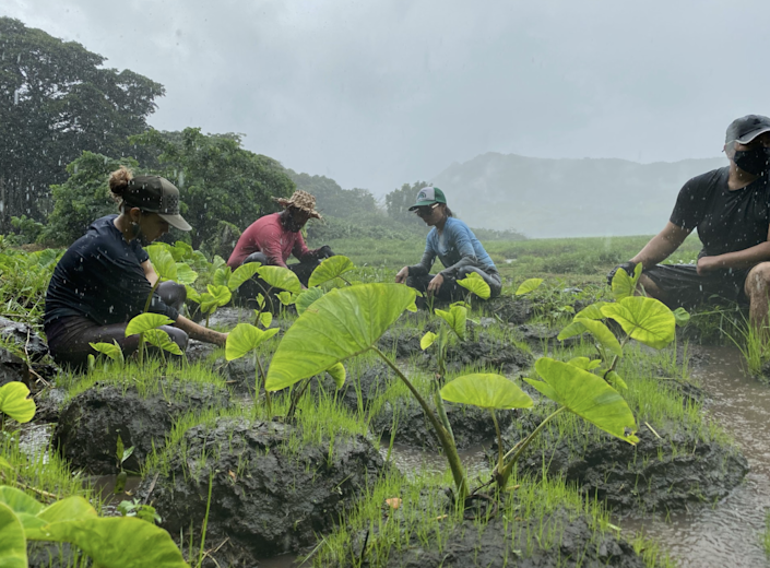 Planting of native species in Hawaii by the youth conservation group, KupuKupu
