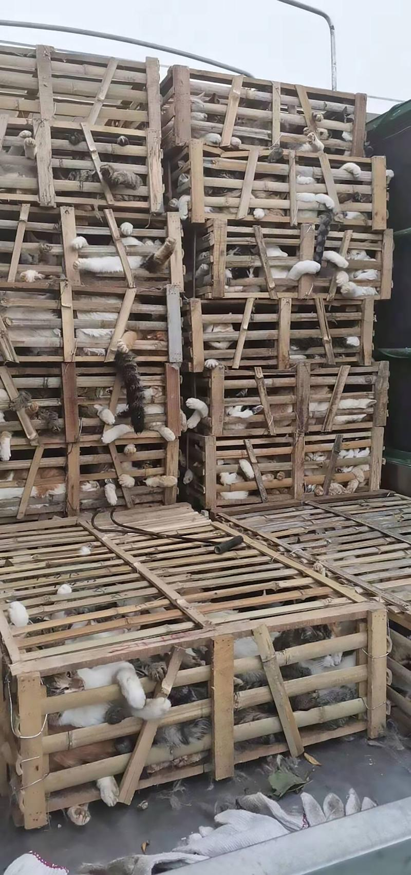 A truck carrying 307 cats destined for restaurants in wooden cages in China.