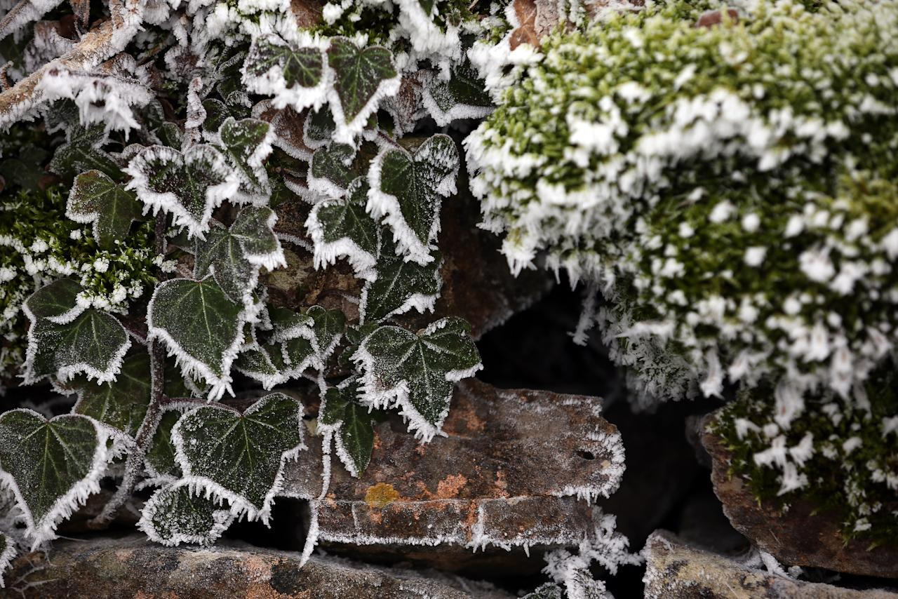 BATH, UNITED KINGDOM - DECEMBER 12:  Frost is seen on plants at the Bath Racecourse on December 12, 2012 near Bath, England. Forecasters have warned that the UK could experience the coldest day of the year so far today, with temperatures dropping as low as -14C, bringing widespread ice, harsh frosts and freezing fog. Travel disruption is expected with warnings for heavy snow in some parts of the country.  (Photo by Matt Cardy/Getty Images)