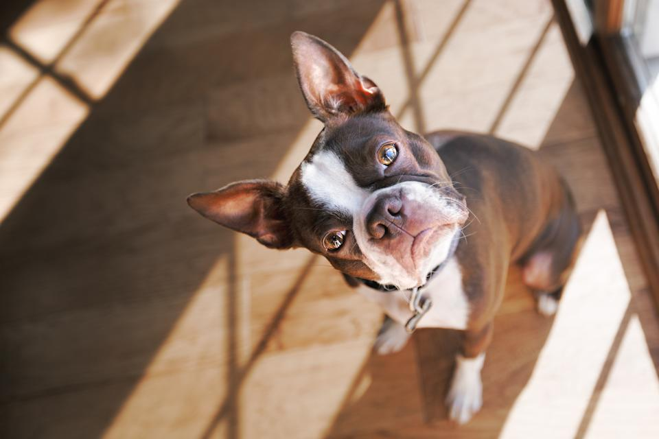 Household toxins ingested by pets in 2020 give insight into human lives during the pandemic. (Photo: Getty Images)
