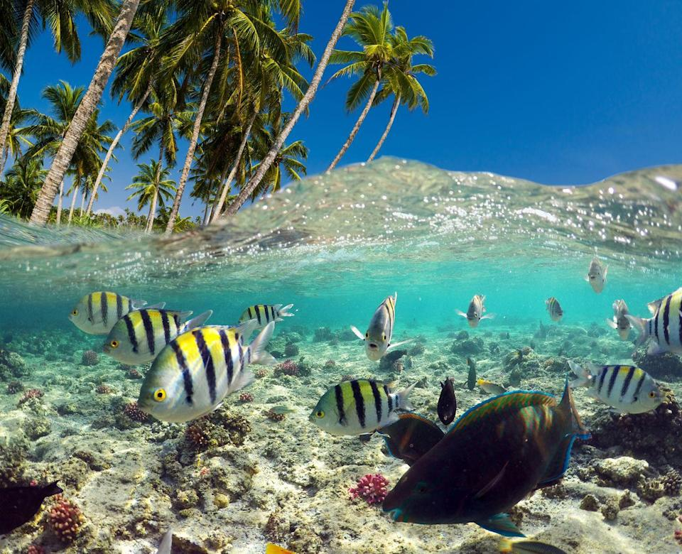 """<p>With over 19,000 square miles of (shrinking) space, the Caribbean hosts 9% of the world's coral reefs. It's also home to the second largest reef, the <a href=""""https://www.worldwildlife.org/places/mesoamerican-reef"""" rel=""""nofollow noopener"""" target=""""_blank"""" data-ylk=""""slk:Mesoamerican Barrier Reef"""" class=""""link rapid-noclick-resp"""">Mesoamerican Barrier Reef</a>. Pollution and other environmental factors are causing coral and barrier reefs to shrink and eventually disappear, so it's important to protect these spaces because they mean so much to not only the beauty of the Caribbean, but its fragile ecosystems. </p>"""