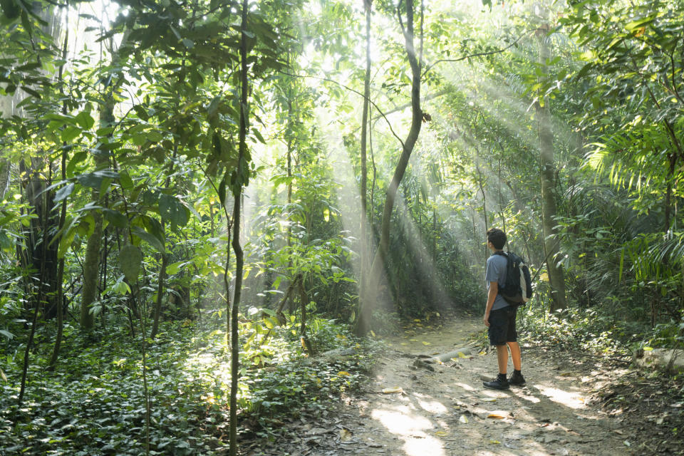 Boy hiking in Singapore's forest. (PHOTO: Getty Images)