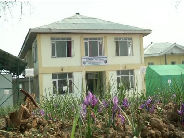 Advance Research Station For Saffron & Seed Spices in J-K's Pampore district.
