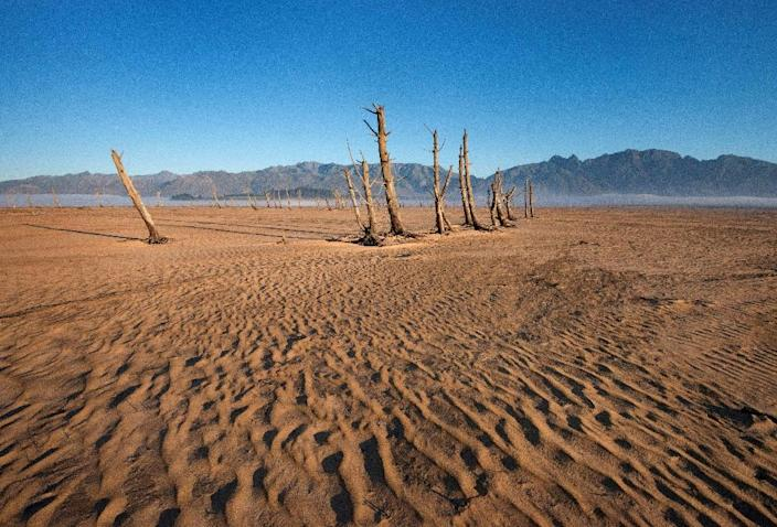 Bare sand and dried tree trunks stand out at Theewaterskloof Dam, which is now only 12.5 percent full (AFP Photo/Rodger BOSCH)