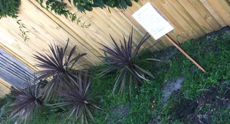 A Sydney woman has put up a sign in Bondi asking a plant thief to stop stealing.