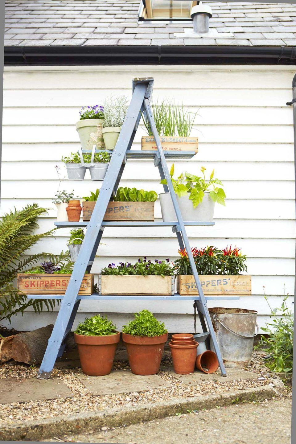 """<p>Turn a wooden ladder into a space-saving stand for flowers, veggies, and herbs with just a few boards and a coat of paint.</p><p><a href=""""https://www.goodhousekeeping.com/home/gardening/advice/g76/diy-ladder-planter/"""" rel=""""nofollow noopener"""" target=""""_blank"""" data-ylk=""""slk:Get the tutorial »"""" class=""""link rapid-noclick-resp""""><em>Get the tutorial »</em></a><br></p>"""
