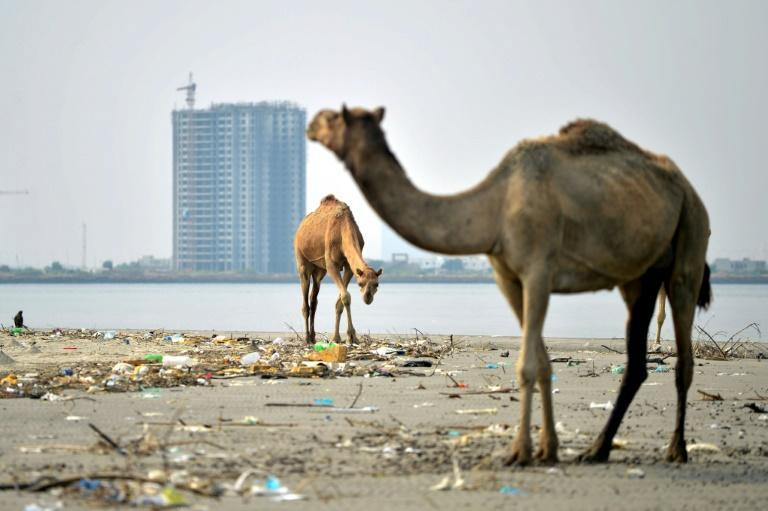 Bundle Island, home to a few camels, is at risk of becoming an enormous real-estate project