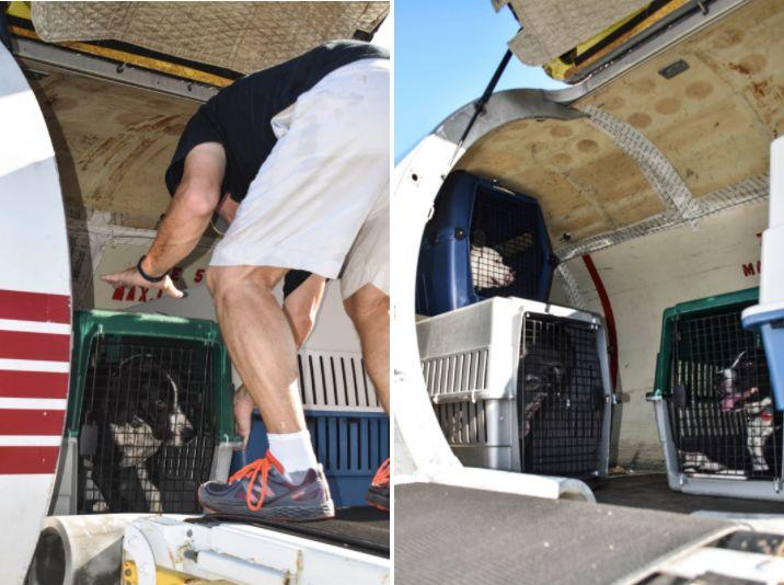 Roughly 200 dogs and cats are heading to new lives in the northeast this week after being pulled from storm-hit shelters in South Florida.