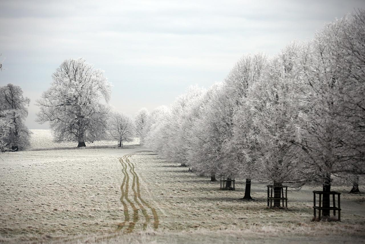 BATH, UNITED KINGDOM - DECEMBER 12:  Frost lingers on the trees at Dyrham Park on December 12, 2012 near Bath, England. Forecasters have warned that the UK could experience the coldest day of the year so far today, with temperatures dropping as low as -14C, bringing widespread ice, harsh frosts and freezing fog. Travel disruption is expected with warnings for heavy snow in some parts of the country.  (Photo by Matt Cardy/Getty Images)