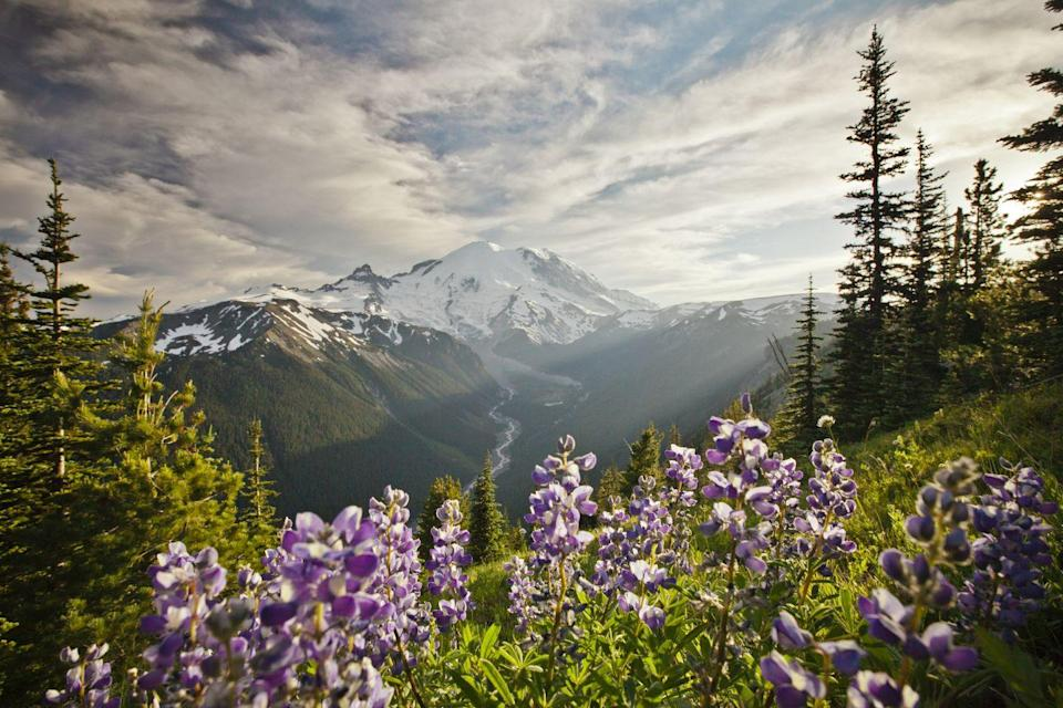 """<p><a href=""""https://www.nps.gov/mora/index.htm"""" rel=""""nofollow noopener"""" target=""""_blank"""" data-ylk=""""slk:Mount Rainier National Park"""" class=""""link rapid-noclick-resp""""><strong>Mount Rainier National Park</strong></a></p><p>Not only is this spectacular mountain one of the tallest in the country, but it's also an active volcano. Visit in the summer to see the vast variety of wildflowers, and in the winter to try your hand at snowshoeing. </p>"""