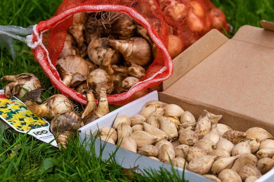 A collection of spring bulbs ready for planting (Alamy/PA)