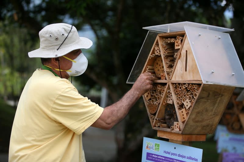 Valencia cleans the structure of a wooden hotel for solitary bees made by AMVA in Barbosa