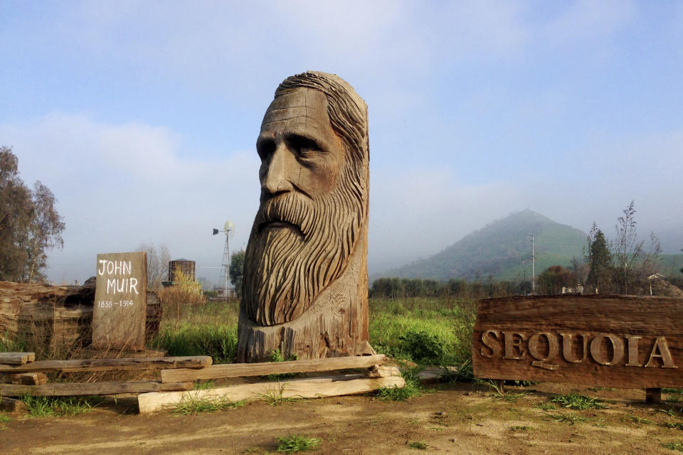 A wood-carved statue of John Muir by R.L. Blair is seen on the road leading to Sequoia National Park near the city of Woodlake, Calif., Jan. 17, 2015. The Sierra Club is reckoning with the racist views of founder John Muir, the naturalist who helped spawn environmentalism. The San Francisco-based environmental group said Wednesday, July 22, 2020 that Muir was part of the group's history perpetuating white supremacy. Executive Director Michael Brune says Muir made racist remarks about Black people and Native Americans, though his views later evolved. (AP Photo/Brian Melley)