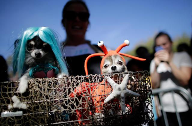 <p>Dogs in halloween costumes attend the 27th Annual Tompkins Square Halloween Dog Parade in Tompkins Square Park on Oct. 21, 2017 in New York City. (Photo: Eduardo Munoz Alvarez/Getty Images) </p>