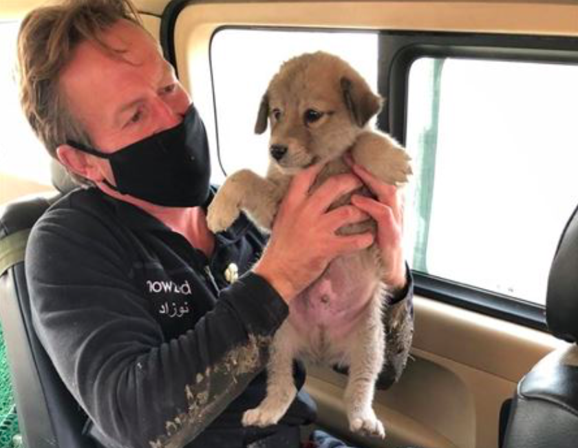 Pen Farthing has campaigned to have his staff and their families as well as 140 dogs and 60 cats evacuated from Afghanistan. (Nowzad)