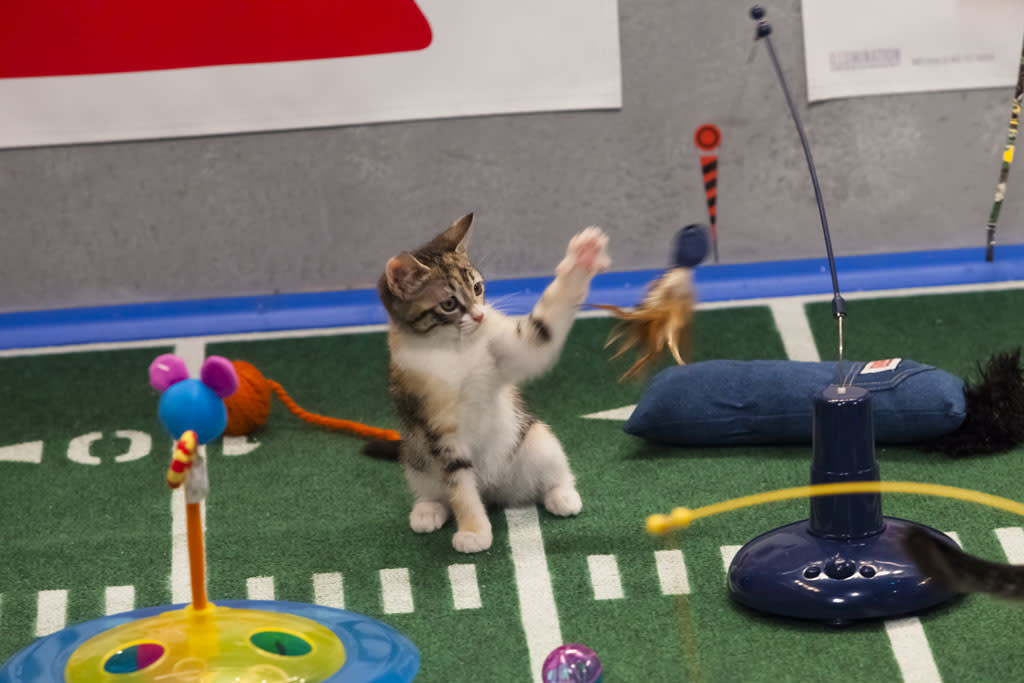 Kitty half time show during Puppy Bowl IX.