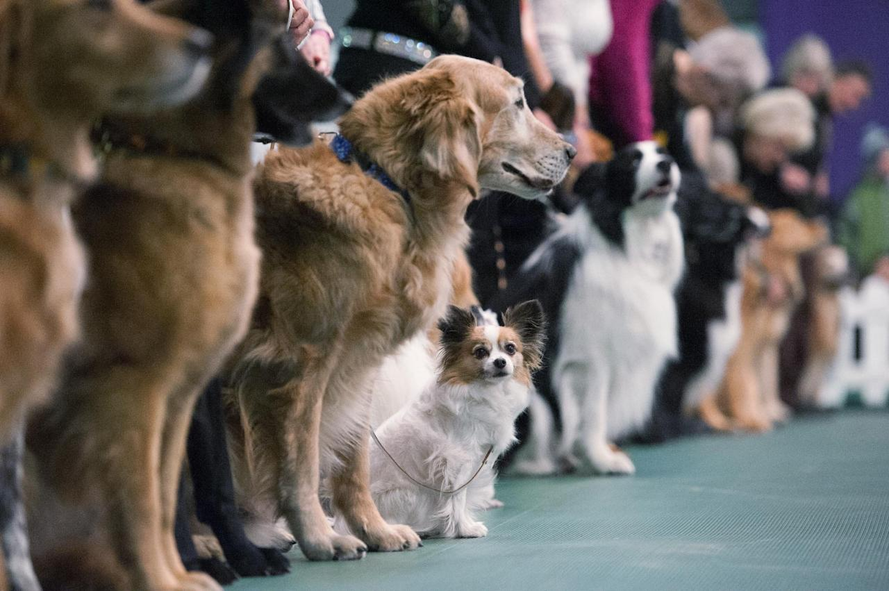Westminster Dog Show Judges
