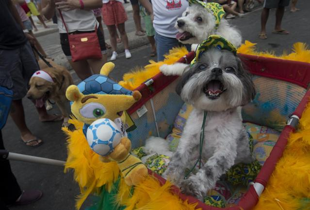"""Dogs stand next to """"Fuleco"""", the official mascot of the 2014 FIFA World Cup, during the """"Blocao"""" dog carnival in Rio de Janeiro, Brazil, Sunday, Feb. 16, 2014. About 100 dogs have had their day at a pre-Carnival bash in Rio de Janeiro. A 10-man brass band and a singer belting out Rio's anthem song """"Cidade Maravilhosa"""" (Marvelous City) kicked off the four-footed fest as dog owners gathered to party down with pooches on Copacabana beach Sunday. (AP Photo/Silvia Izquierdo)"""