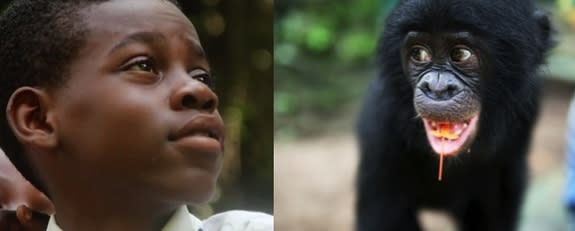 Bonobos are gravely endangered, but scientists can use knowledge of human psychology to boost support for the animals' protection among the populations that matter most to bonobos' survival — the Congolese. Such research is conducted at Lola Ya