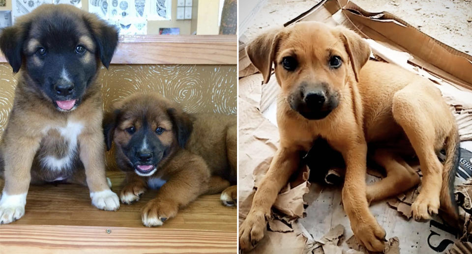 Three puppies rescued by the group. Source: Angela Glover