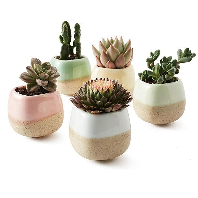 """<p>This <a href=""""https://www.popsugar.com/buy/Sun-E-5-Planter-Set-400782?p_name=Sun-E%205%20Planter%20Set&retailer=amazon.com&pid=400782&price=17&evar1=savvy%3Aus&evar9=45614805&evar98=https%3A%2F%2Fwww.popsugar.com%2Fsmart-living%2Fphoto-gallery%2F45614805%2Fimage%2F45614857%2FSun-E-5-Planter-Set&list1=shopping%2Cgifts%2Choliday%2Cchristmas%2Cgift%20guide%2Clast-minute%20gifts%2Cgifts%20under%20%2425%2Cgifts%20under%20%2450%2Caffordable%20shopping&prop13=api&pdata=1"""" rel=""""nofollow"""" data-shoppable-link=""""1"""" target=""""_blank"""" class=""""ga-track"""" data-ga-category=""""Related"""" data-ga-label=""""https://www.amazon.com/dp/B01NBODEU3/ref=cm_gf_aAN_i3_d_bt20_p0_qd5__________________etq5T4Y72amJAV3dt0KC"""" data-ga-action=""""In-Line Links"""">Sun-E 5 Planter Set</a> ($17) is great for someone with a new home or apartment. You can also get the set and pass them out to coworkers. </p>"""
