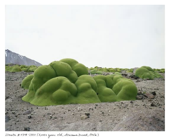 Earth's Oldest Living Things Immortalized in Stunning Photos