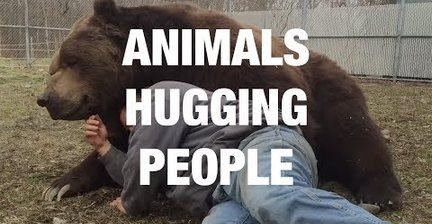 <p>Enjoying a loving embrace is one of the best moments you can share with your animal friend.</p><p>Whether your animal friend is a fluffy cocker spaniel or a chilled out grizzly bear, there are hugs all round! Credit: Various via Storyful</p>