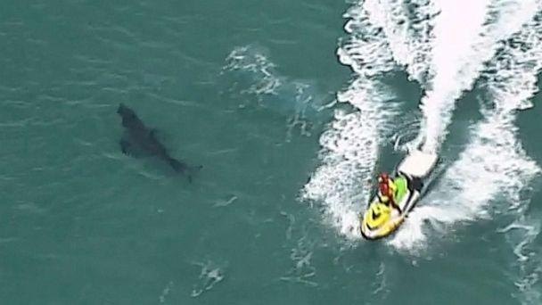 PHOTO: A jet ski passes over a shark swimming along the coast of Kingscliff, New South Wales, Australia, Sunday, June 7, 2020. A surfer, 60, was attacked and killed by a 3-meter (10-foot) shark off the coast of northern New South Wales state on Sunday. (AP)