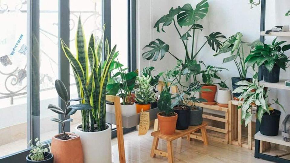 Some easy to grow, low maintenance plants for beginners