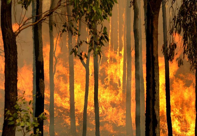 A bushfire burns out of control in the Kiewa Valley towards the town of Dederang in the Victoria Alps on February 10, 2009
