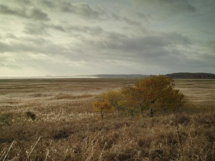 Westwood Marshes at Walberswick. WildEast is aiming to return 250,000 hectares to nature across East Anglia: WildEast