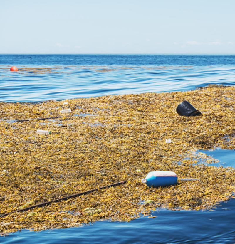 What sits at the bottom of the Bay of Fundy? Nearly 2 million pieces of litter