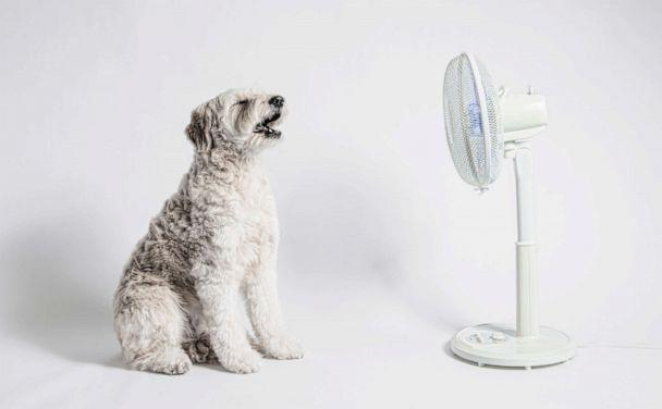 PHOTO: The dog sits in front of a fan. (STOCK PHOTO/Getty Images)