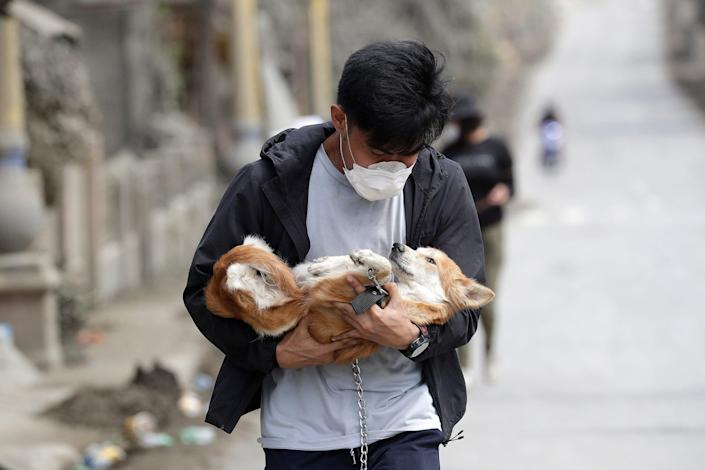 A volunteer carries a dog animal rescue from abandoned houses near the Taal volcano as residents insisted on safer grounds leaving some of their pets behind Thaisay, province of Batangas, the southern Philippines on Wednesday Jan.15 , 2020.